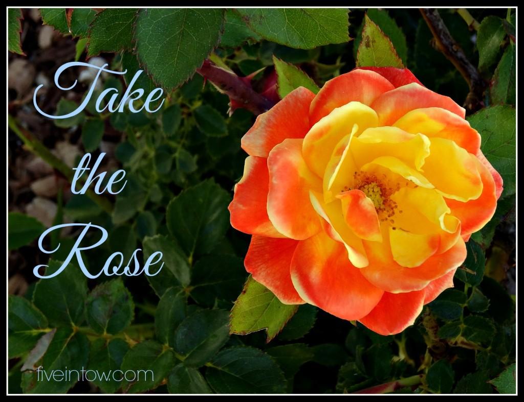 Take the Rose